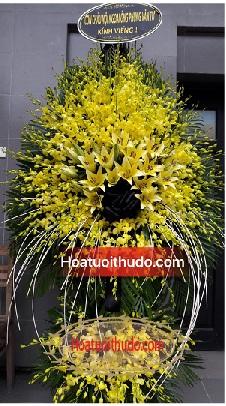 cây lan vàng tại nhà tang lễ cầu giấy